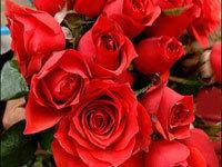 Roses2_21307_1